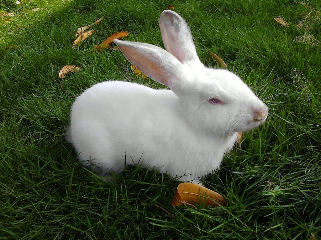 Lee la historia de miguel, que ganó más de 2000 euros con una web de conejitos